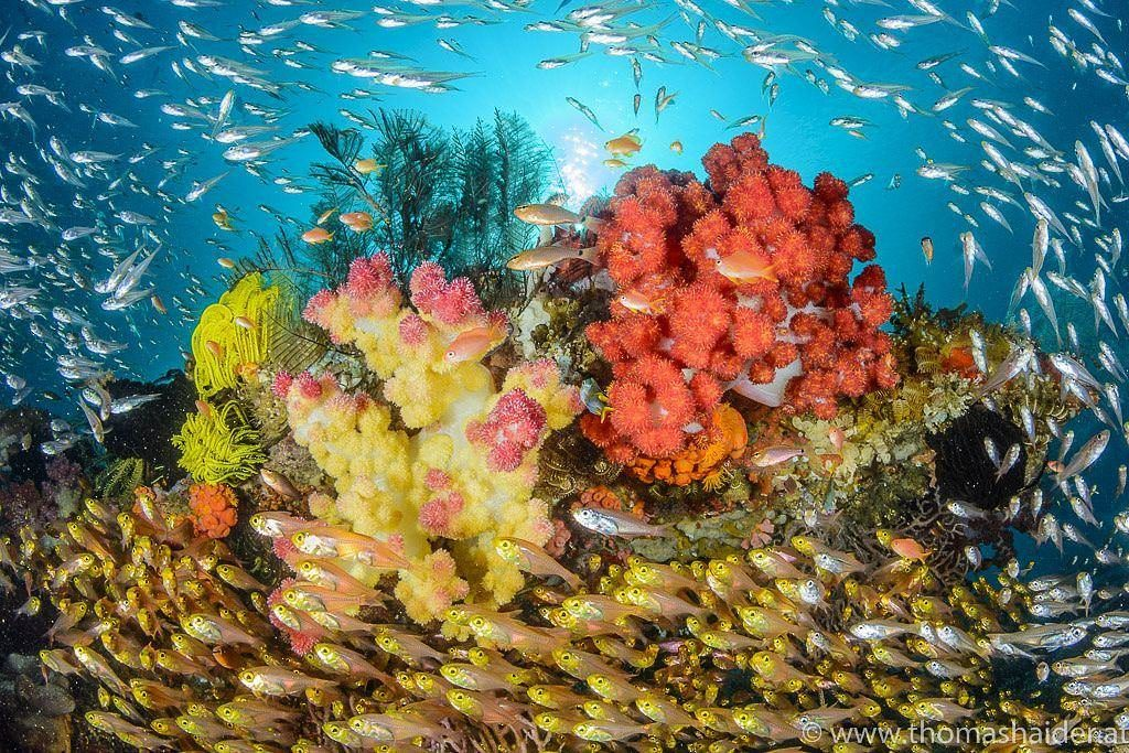 Triton bay lively coral reef