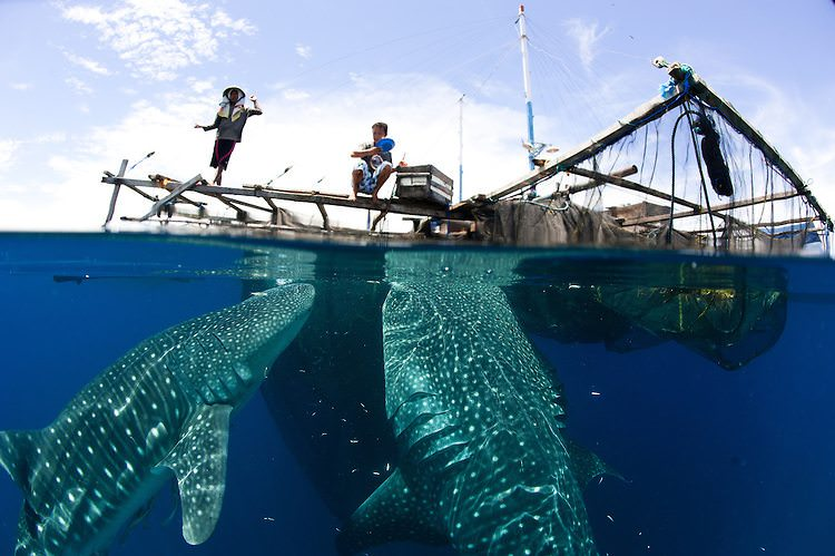 Meeting the Incredible Whale Sharks