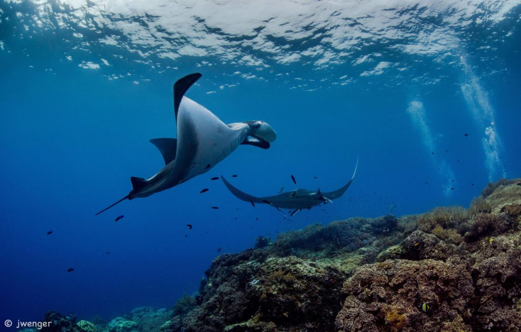 Diving with Manta Rays The Passage | Hello Papua
